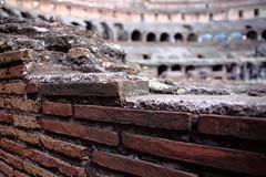 Colosseum (arka02) Tags: italy rome flower roma brick yellow ancient ruins bricks colosseum arena arka02