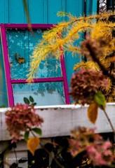 20141109 Niagara - Window (mishlove1) Tags: window table wine barrel cottage roadtrip niagara vineyards cottages fallcolours grimsbybeach canon7d
