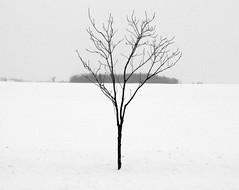 Tree in snow (Bill Pawlitzki) Tags: winter white snow black tree field photo nikon flickr most ever viewed 8800