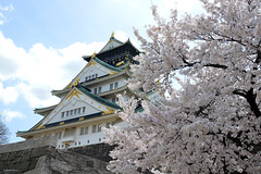 Osaka Beauty (Isabel-Valero) Tags: travel castle japan cherry asia  cherryblossom  sakura osaka japon japn