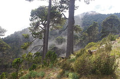 Volcn Tajumulco, Guatemala (ARNAUD_Z_VOYAGE) Tags: city sky people cloud sun white mountain black color green nature colors beautiful rock fog clouds america forest landscape volcano climb site amazing san view natural earth guatemala altitude centro central large peak windy formation crater area huge volcanoes marcos region volcanic moutains department eruption protected centrale highest extremely volcan volcn stratovolcano tajumulco volcanism