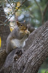 W99A1636 (J. Cahn) Tags: california trees tree green nature colors animal animals canon squirrel squirrels vibrant wildlife filter nd 5d canon5d dslr canondslr ndfilter 24105mm canon24105mm canon24105 variablendfilter canon5dmarkiii 5dmk3 5dmarkiii 5dm3 variablend 5dmark3 canon5dmark3 tiffenvariablend