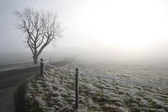 einfach so (anita.niza) Tags: winter mist fog loneliness nebel hiver einsamkeit brouillard irgendwo