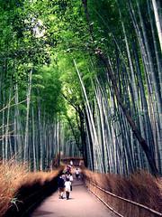 Giappone 2014-62 (Felson.) Tags: wood trip travel holiday verde green japan forest kyoto path bamboo arashiyama sentiero viaggio giappone vacanza bambu bosco bamboogrove bambù