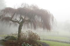 Into the Mystic (Harry2010) Tags: mist canada tree fog vancouver burnabymountain