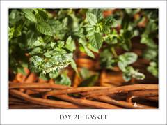 Day 21 - Basket (purplefrog7777) Tags: brown flower green cane basket mint worth1000 purplefrog 30day