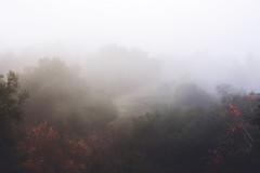 Red Leaves on Green and Fog (Rachelle Mendez) Tags: trees nature fog 35mm landscape losangeles hills cropped fullframe redleaves nakedlandscape thisiscalifornia explorecalifornia