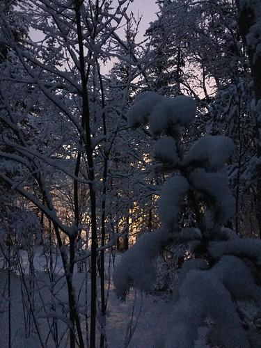 Snow days Whitehorse
