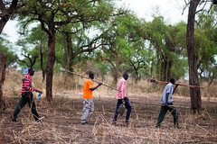 Rebel soldiers back to farming (Albert Gonzalez Farran) Tags: southsudan farming io soldiers lands agriculture troops cultivation foodcrisis uppernile foodsecurity rebelsoldiers maiwut splaio