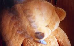 How many Teddy Bear are there? (Minchioletta) Tags: teddybear pentaxmesuper orso c41 50mmlens smcpentaxa50mm smcpentaxa50mmf17 orsodipeluche lomo400 lomocn400 analogicait lomographycn400 lomographyandvintagecameras cineamexmultiimage6p