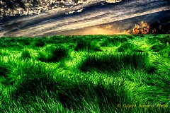 Alla fine del giorno (Gianni Armano) Tags: verde del photo italia tramonto foto fine piemonte cielo colori gianni alla alessandria giorno armano