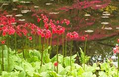 Japanse tuin (Gerard Stolk (vers L'Action de grâce)) Tags: denhaag haag thehague lahaye japansetuin clingendaal