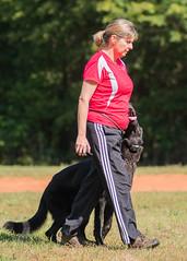 2016-05-22, IPO Training-5 (Falon167) Tags: dog shepherd rhonda german miles gsd germanshepherddog