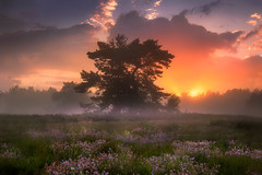 Dreamy Evening (albert dros) Tags: sunset sky mist tree netherlands dutch fog sunrise heather dreamy fooliage albertdros