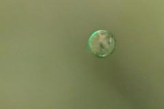 plankton (richie rocket) Tags: dorset glug tango underwater plankton gertrude wreck