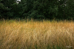 Light in the Grass (kaeley.warren) Tags: landscapes fields hdr straws countrylife
