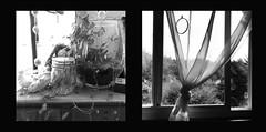 drape (bunchadogs & susan [fell down,broke rib]) Tags: terrarium cymbaline curtain iphone provokecameraapp fortunacalifornia diptych stilllife artlibres