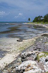 Low Tide (-j-o-s-e-) Tags: blue dog storm abandoned beach coral boat bright empty tide hurricane low ivan shoreline windy sunny blowing grand east walker shore figure tropical cayman wreck reef derelict tropics eastend