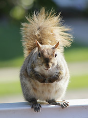 Is it just me or does he look a bit like... (greyloch) Tags: animal squirrel humor blond rodentia 2016 canonrebelt3i