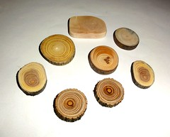 Wood slices mix various. Jewelry supplies, wall art, small wooden discs. Jewelry findings, wooden jewelry parts, jewellery making supply. (john bonham2) Tags: woodslices woodendiscs rusticwedding jewelrysupplies jewelryfindings natural wood slices discs rustic weddings jewelry supplies findings making parts nature texture colors tree branches twigs