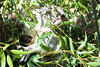 Darling Harbour - Wild Life Sydney Zoo (lukedrich_photography) Tags: australia oz commonwealth أستراليا 澳大利亚 澳大利亞 ऑस्ट्रेलिया オーストラリア 호주 австралия newsouthwales nsw canon t6i canont6i history culture sydney سيدني 悉尼 सिडनी シドニー 시드니 сидней metro city wildlife zoo australian animal adventure tourist site mammal marsupial koala arboreal herbivor joey eucalyptus tree plant leaf leaves