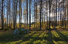 Iron Age/Early Medieval burial site in Pivniemi, Lempl, Finland (umoilanen) Tags: nature finland archaeology history archaeologicalsite outdoor sunlight rockcarving sabre