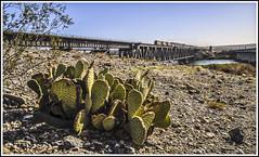 Colorado Spikes (Jim the Joker) Tags: bnsf dash9 4552 c449w 3929 et44c4 5155 coloradoriver arizona nevada railroad cactus railway freight train