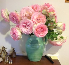 """Vase packed with """"Pierre de Ronsard"""" rose blossoms (spelio) Tags: travel rose lounge australia email nsw bloom 2014 australiancapitalterritory pierrederonsard"""