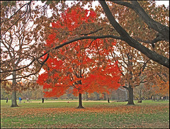 Great Lawn, Central Park (newyorkimage) Tags: world park plaza new york autumn columbus west flower tower fall colors birds rose circle subway freedom high chinatown day village sheep cardinal manhattan library side greenwich great central lawn battery meadow police center parade line east upper chef lincoln jersey jefferson lower zinnia avenue trump 5th trade irt veterans fifth bmt ansonia ind