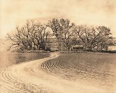455 - Wheat Field Near Herndon - Lith Print (Brad Renken) Tags: blackandwhite film pentax k1000 kodak wheat d76 kansas lith 13 smc rawlins arista kodabrome legacypro