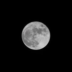 Full circle (Treflyn) Tags: uk winter moon last garden circle reading back december space united year kingdom luna full whole sphere berkshire lunar 2014 earley
