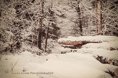 The Woods (Vicki Lund Photography) Tags: winter nature water landscapes woods nikon artist fineart maine newengland naturallight freelance countryroads madeinamerica freelancephotographer newgloucester followthelight maineartist fineartprints nikond90 mainenewengland mainephotographer fineartlandscape mainetrees newenglandphotography colorsnatural httponfbmevickilundphotographywelcome vickilund greatmainevacations vickilundmaine httpaboutmevickilundphotography