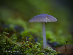 Split (JKmedia) Tags: november macro green nature mushroom forest canon moss woods fungi growth fungus toadstool produce canoneos7d ef100mmf28lmacroisusm boultonphotography