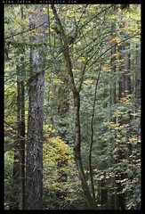 _8B06086 copy (mingthein) Tags: california trees usa nature zeiss creek forest t landscape nikon san francisco bokeh availablelight apo carl redwood ming planar otus purisima 1485 onn 8514 d810 thein zf2 photohorologer mingtheincom mingtheingallery