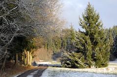 (Gerlinde Hofmann) Tags: germany thuringia village bürden snow conifer path trail cloudysky