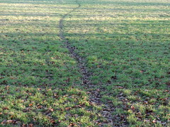 This is the way (ART NAHPRO) Tags: winter england field rural sussex december path meadow farmland pasture 2014