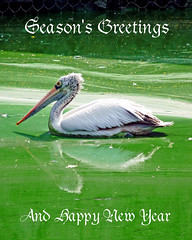 Season's Greeting      #EPLORED# :) (uvaisjm - Al Seylani Photography) Tags: newyear greetings 2015