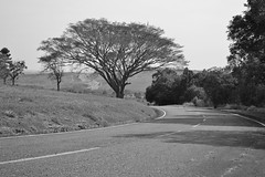 Caminho! (Daniel J. Nodari) Tags: brazil blackandwhite nature paran brasil natureza pretoebranco