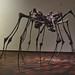 Spider Couple in Louisiana