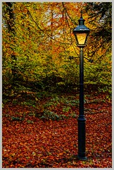 5D-3596-Auto (ac | photo) Tags: autumn trees light fall nature colors leaves landscape fallcolors lamppost