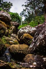 Nature - ස්වභාවිකත්වය