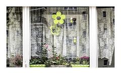 The green paper flower (Giara,) Tags: berlin germany deutschland duitsland berlijn windowportrait windowscape