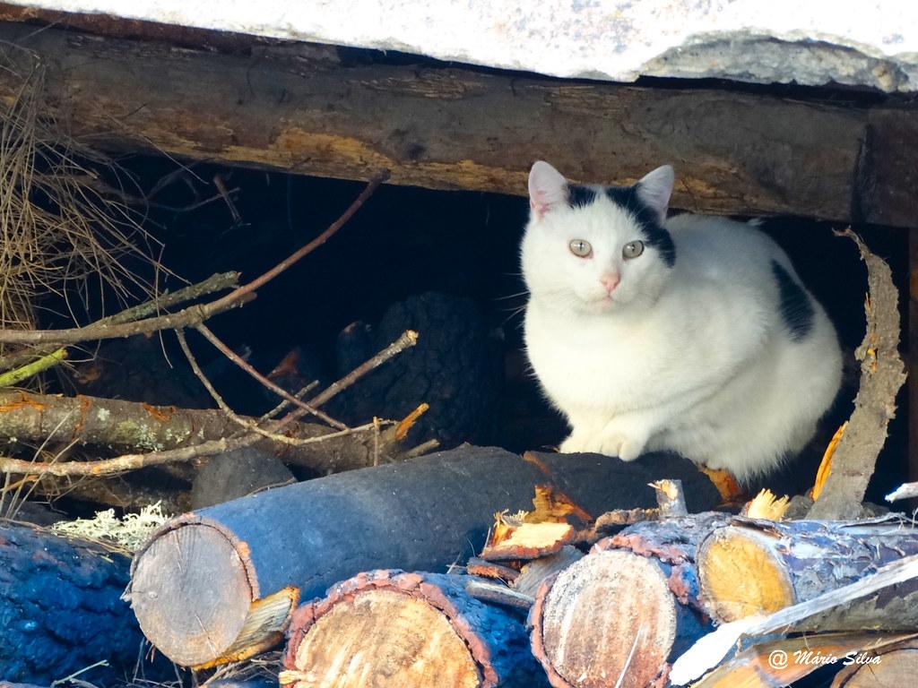 Águas Frias (Chaves) - ... o gato sobre a lenha ...