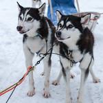 Jesse and Inuit thumbnail