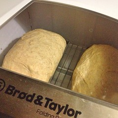 "Two loaves of our 1840 Farmhouse Brioche just went into the proofer. • <a style=""font-size:0.8em;"" href=""http://www.flickr.com/photos/54958436@N05/15884011971/"" target=""_blank"">View on Flickr</a>"