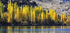 Down in the valley ! (C@MARADERIE) Tags: autumn pakistan lake color nature landscape colorful natural naturism northernareas skardu autumnalscene kachura beautifulpakistan upperkachura kachuralake skarduvalley lakesofpakistan beautyofpakistan gilgitbaltistan naturismphotography