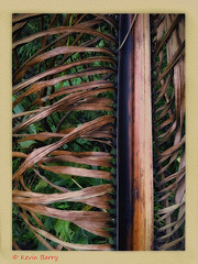 Royal Palm frond (Kevin B Photo) Tags: abstract color vertical colorful florida south frond southern fl iphone royalpalm kevinbarry fakahatcheestrandpreservestatepark
