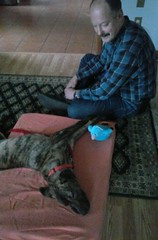 Lucy and Stefan (jcravens) Tags: oregon mutt beaverton pdx brindle mixedbreed petco fosterdog fostering