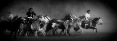 En el Da Nacional del Gaucho (Eduardo Amorim) Tags: horses horse southamerica argentina criollo caballo cheval caballos cavalos pferde herd cavalli cavallo cavalo gauchos pferd chevaux gaucho cavall  amricadosul gacho amriquedusud provinciadebuenosaires  gachos  sudamrica sanantoniodeareco suramrica amricadelsur areco sdamerika crioulo caballoscriollos criollos  tropillas americadelsud tropilhas tropilla crioulos cavalocrioulo americameridionale tropilha caballocriollo eduardoamorim cavaloscrioulos