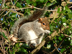 Squirrel (Peanut1371) Tags: trees mammal squirrel tail nationalgeographicwildlife